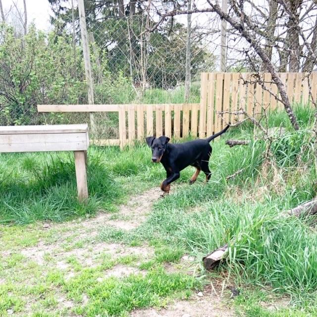 Hundkurser Valpkurs Föreläsningar